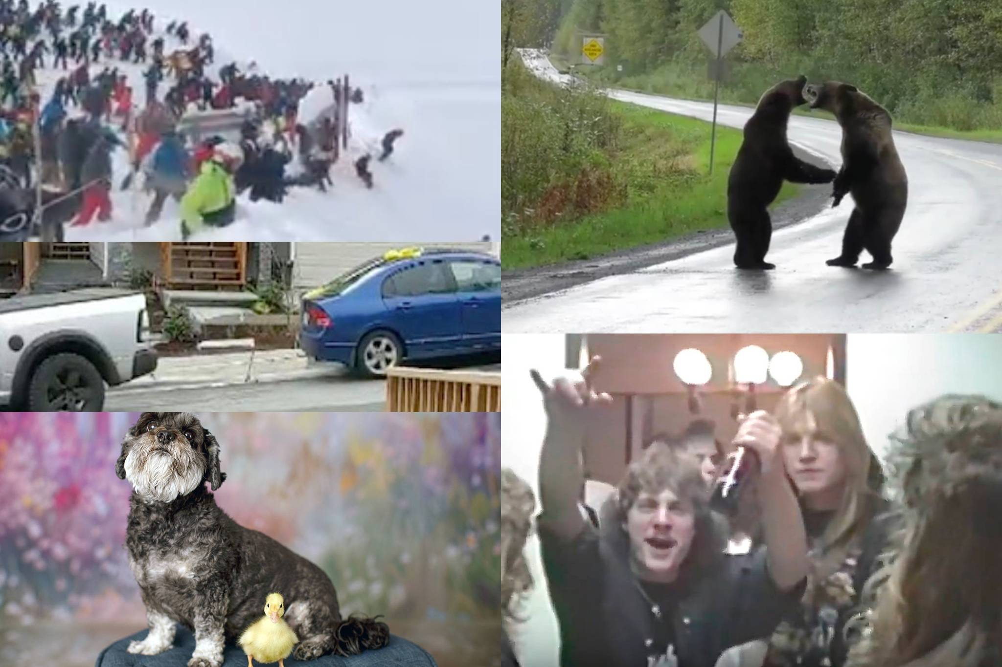 Fighting bears, angry neighbours: Here's what went viral for 2019 in B.C.
